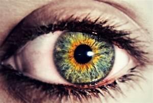 Heterochromia Science on emaze