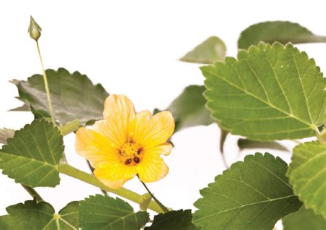 Landscaping With Native Hawaiian Plants  Green Magazine