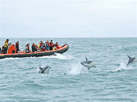 Boat Trip Cornwall by Padstow Boat Trip And Tours In Cornwall Sea Safari