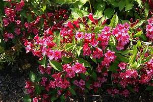 Blühende Pflanzen Winterhart : bl hende str ucher winterhart heidelbeeren pflanzen ~ Michelbontemps.com Haus und Dekorationen