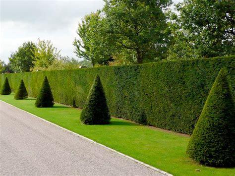 Garten Gestalten Mit Eiben by Eibe Taxus Baccata Hauenstein Rafz Garten Garten