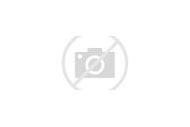 West Highland Terrier White Westie Dogs