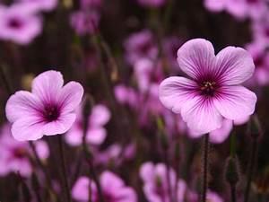 Purple Flower Wallpaper #16141 Wallpaper