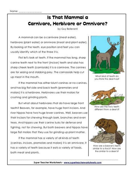 omnivore carnivores herbivores science carnivore cycle animal fact herbivore omnivores animals carnivorous worksheets week mammal activities
