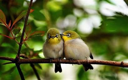 Birds Desktop Wallpapers Bird Background Backgrounds Lovebirds