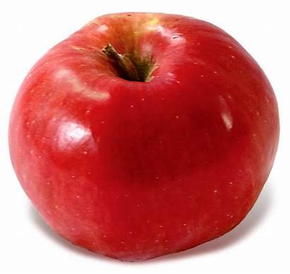 Northern Spy Baldwin Apple Apples Heirlooms Classic