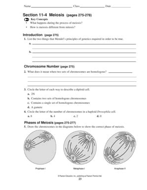 section 11 4 meiosis fill printable fillable