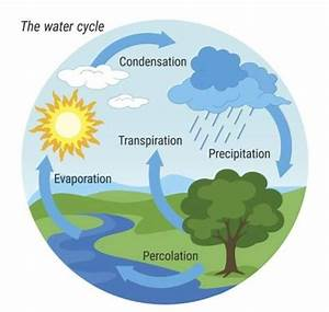 Explain The Water Cycle With The Help Of A Diagram