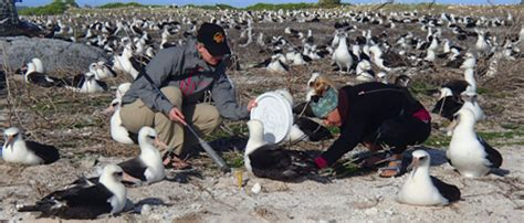 involved midway atoll national wildlife refuge