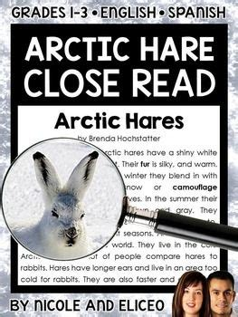 17 best ideas about arctic hare on white