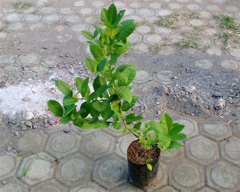 tips merawat bibit tanaman agar selalu sehat dan cepat