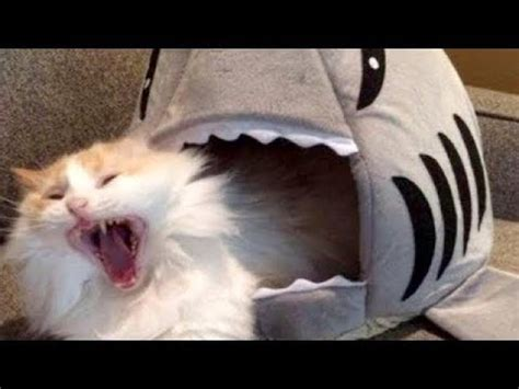 Laugh So Hard You'll Cry  Funniest Cat Videos Compilation