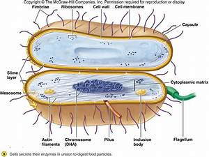 Microbiology Concepts: Morphology of Bacteria- Part-I