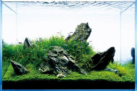 aquascape amano aquascape nature aquarium style t a g