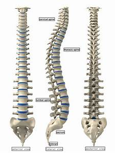 Anatomy4fitness  Stay Centered  Your Guide To A Healthy Spine