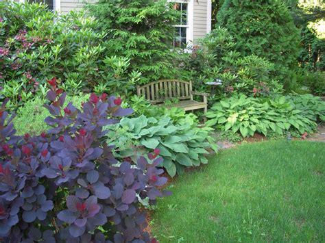 bush garden ideas smoke bush hosta landscape ideas pinterest evergreen shrubs shrub and garden ideas
