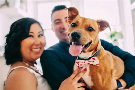 Couples Want Their Pets In Their Weddings And Doggone It