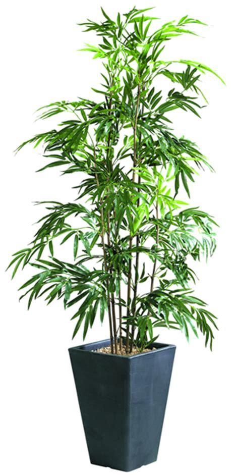 plantes de bureau plantes mobilier bureau