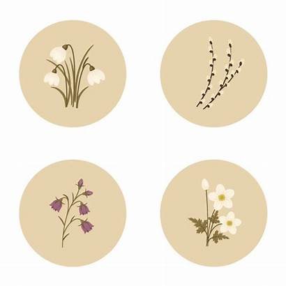 Illustrator Shapes Adobe Spring Flowers Basic Create
