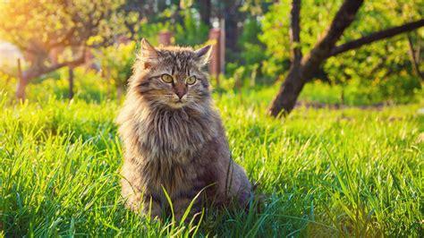 summer tips  cats cat advice vetspets