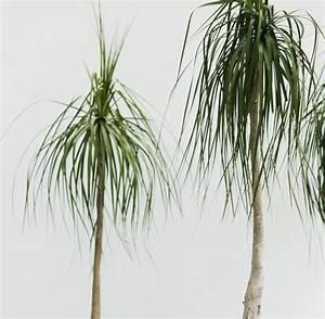Zimmerpflanze Lange Grüne Blätter : experten tipps zehn zimmerpflanzen die herrlich anspruchslos sind welt ~ Markanthonyermac.com Haus und Dekorationen