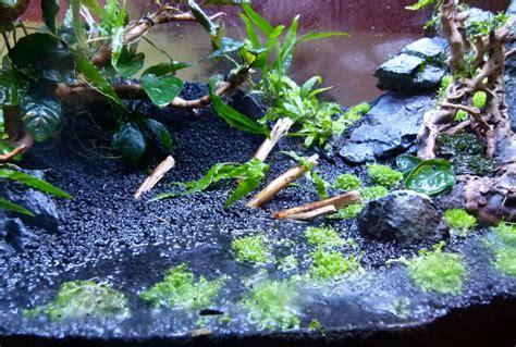 etente a linge parapluie gestion aquarium 28 images gestion aquariums gestion aquariums gestion aquariums logiciel