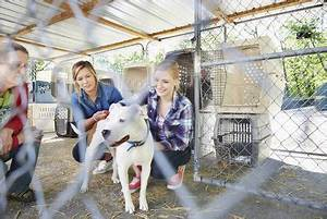 Animal Control Officer Job Description 7 Different Animal Rescue Career Options