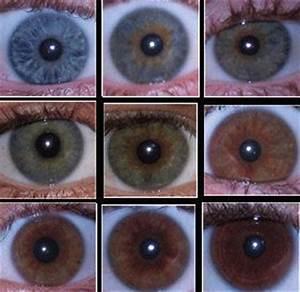 Eye color, Rare eye colors and Genetics on Pinterest