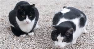 black and white cat names black and white tuxedo cat names cattime