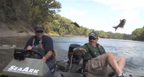 Asian Carp Attack Boat by Fishermen Catch Of Fish As Asian Carp Jump Into