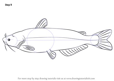 learn   draw  blue catfish fishes step  step