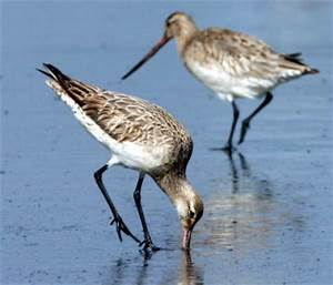 Speaking Up for the Humble Estuary – Forest & Bird