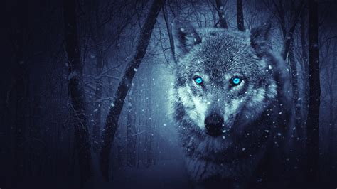 Wallpaper Wild Wolf, Blue Eyes, Scary, Snowfall, Winter