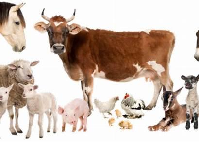 Farm Animals Pngkey Transparent Clipart Automatically Start