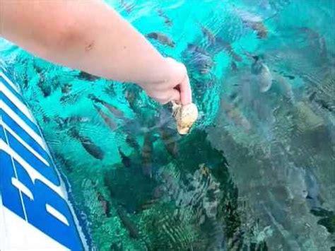 Boat License Jamaica by Glass Bottom Boat Montego Bay Jamaica 2014 Youtube