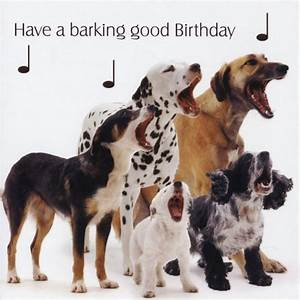 Happy Birthday Memes Dog | WishesGreeting