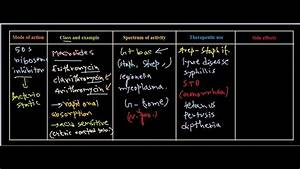 Macrolides Antibiotics