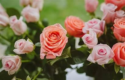 Pink Lucia Rotolone Christine Roses Eichmann Leanne