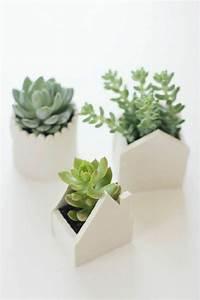 Pflegeleichte Zimmerpflanzen Mit Blüten : sch ne zimmerpflanzen so dekorieren sie ihr zuhause mit pflegeleichten pflanzen ~ Sanjose-hotels-ca.com Haus und Dekorationen