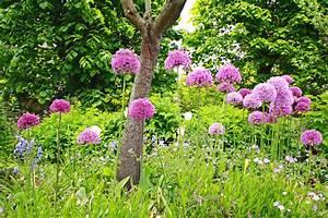 Was Blüht Jetzt Im Garten : so bl ht dein garten das ganze jahr willkommen in franks ~ Lizthompson.info Haus und Dekorationen