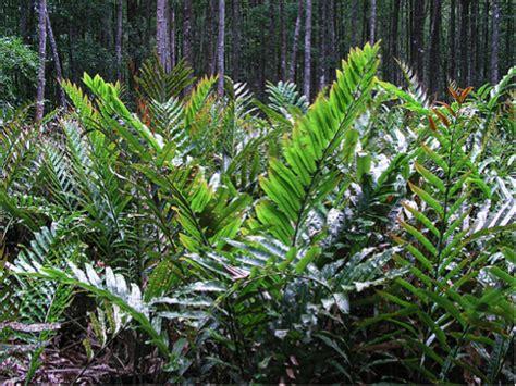 jenis jenis tanaman hutan mangrove mangroove