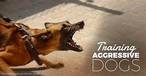 training aggressive dogs understanding dominant and With dog training for aggressive dogs