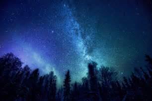 Starry Night Sky Forest