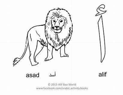 Alphabet Arabic Coloring Alif Letter Asad Lion