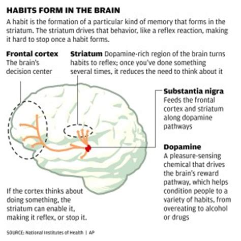 how habits are formed in the brain our brains make bad habits hard to break lifestyles