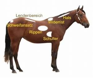 Idealgewicht Berechnen Formel : beim pferd das idealgewicht berechnen pferdewissen online ~ Themetempest.com Abrechnung