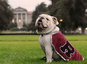 18 Reasons Why Bulldogs Are Undeniably The Best College