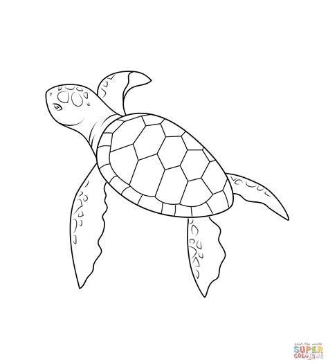 baby turtle coloring page  printable coloring pages