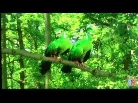 Tittifers In The Garden - green tittifers tune