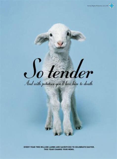 print ad titled lamb    jwt italy advertising